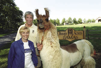 "Until recently, Dan and Dale Goodyear were among the largest llama breeders in the U.S. for nearly 20 years. ""At the center of all this is the fact that we just fell in love with llamas, with their temperament and their serenity. They're very quiet, beautiful animals that enhanced our lives,"" says Dale."